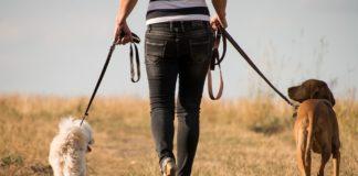 """Люблять тишу і спокій: ТОП-5 найкращих порід собак для інтровертів"""" - today.ua"""