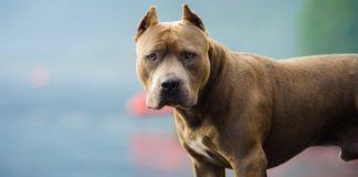 Не лучший друг: ТОП-5 пород собак, которые могут нести угрозу жизни человека - today.ua