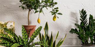 Кімнатні рослини принесуть здоров'я в дім при одній умові - зробіть, не пошкодуєте - today.ua