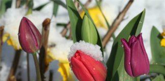 Температурные перепады и мокрый снег: синоптики огорчили прогнозом до конца апреля - today.ua