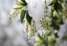 Аномальний квітень: синоптик розповів, де випаде до 30 см снігу - today.ua