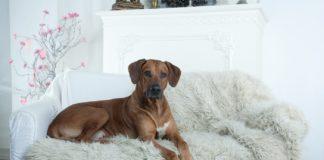 Не постраждають від самоізоляції: ТОП-3 породи собак, з якими не буде проблем на карантині - today.ua