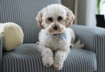 ТОП-5 лучших пород собак для городской жизни - today.ua