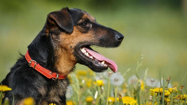 ТОП-3 породы собак, которых не стоит заводить семьям с детьми