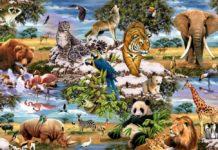 Тест на характер: виберіть на картинці тварину і дізнайтеся про себе щось цікаве - today.ua