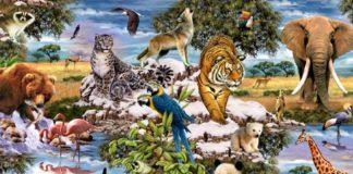 Тест на характер: выберите на картинке животное и узнайте о себе что-то интересное - today.ua