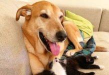 """Пес став """"мамою"""" для кошенят-сиріт: мережу сколихнула чуттєва історія - today.ua"""