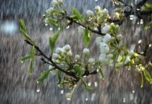 Дощі аж до літа: синоптики озвучили прогноз погоди в Україні до кінця травня - today.ua