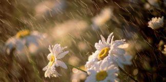 Прогноз погоди на літо 2020 в Україні: синоптики виступили з попередженням - today.ua