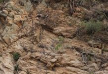 Тест на уважність: знайдіть оленів серед скель за 20 секунд - today.ua