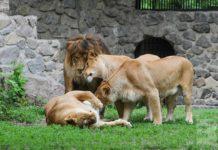 Завтра в Киеве откроется зоопарк после первого этапа реконструкции, - Кличко - today.ua