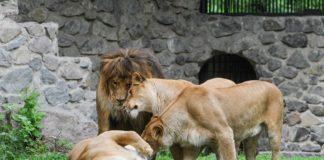 Завтра у Києві відкриється зоопарк після першого етапу реконструкції, - Кличко - today.ua