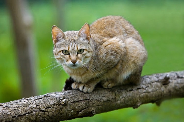 Кошки оберегают дом от зла и болезней: уникальные способности пушистых красавиц
