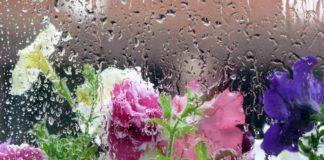 На Україну обрушаться дощі і грози: синоптики знову прогнозують холод - today.ua