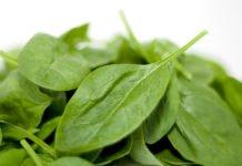 Зелень може бути небезпечною: кому краще не вживати шпинат - today.ua