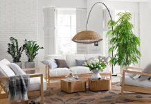 Кімнатні квіти виганяють хвороби: Топ-5 зелених цілителів для будинку - today.ua
