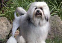 Самые дорогие собаки в мире: Топ-3 породы, которых оценивают в тысячи долларов - today.ua