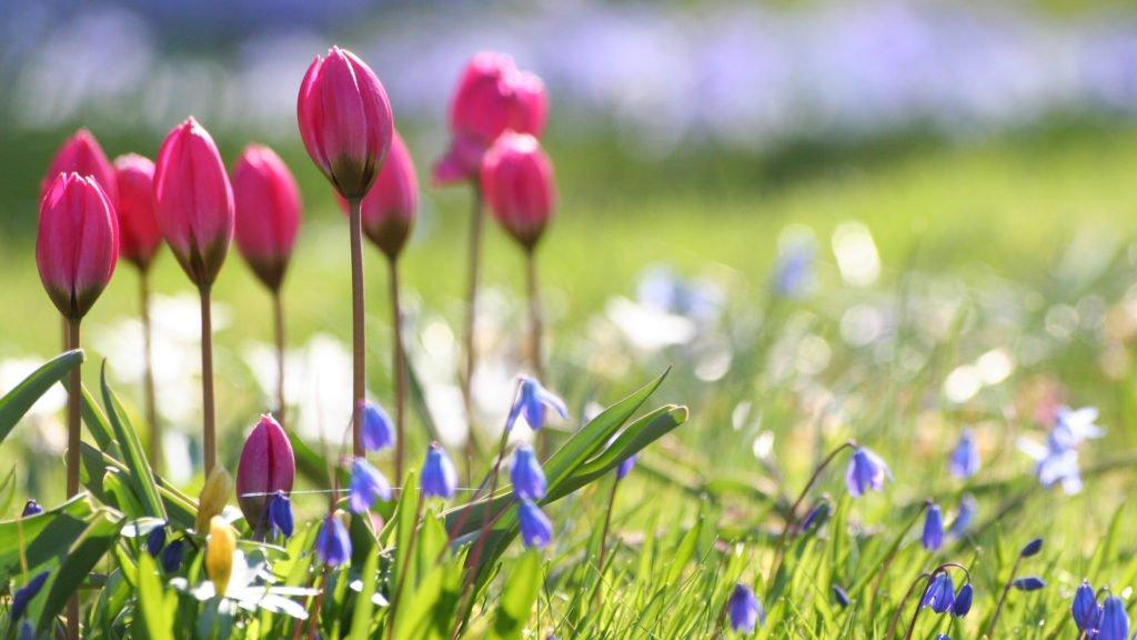 Свято 11 травня: що потрібно робити в Максимів день, щоб залишатися здоровим