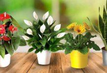 ТОП-3 комнатных растений, которые приносят несчастье - today.ua