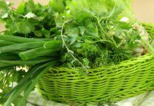 Свежая зелень повышает иммунитет: как правильно выбрать и чем полезны весенние растения - today.ua