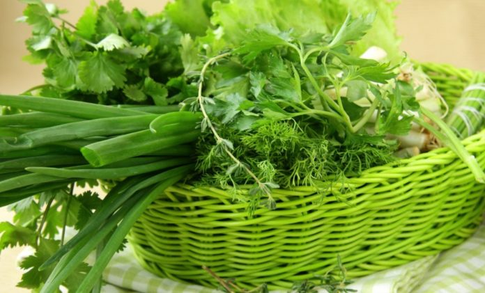 Свіжа зелень підвищує імунітет: як правильно вибрати і чим корисні весняні рослини - today.ua