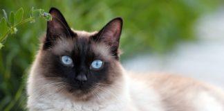 Кішки оберігають дім від зла і хвороб: унікальні здібності пухнастих красунь - today.ua