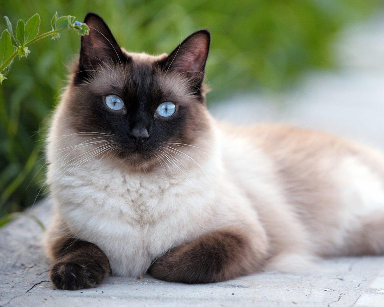 Кошки оберегают дом от зла и болезней: уникальные способности пушистых красавиц - today.ua