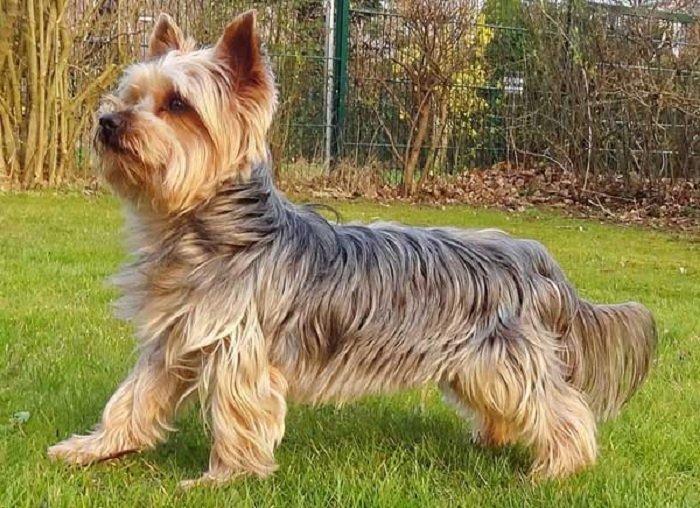 ТОП-3 породи собак, які не викликають алергію - today.ua