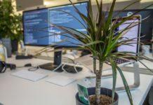 Какие комнатные растения защитят от электромагнитного излучения компьютера - today.ua