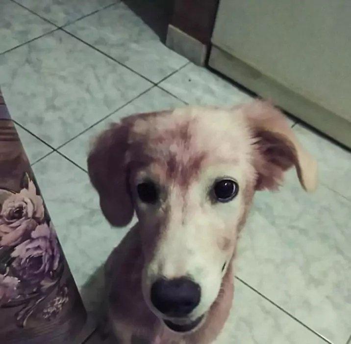 Мужчина купил необычного красного щенка: он был в шоке, когда узнал о собаке правду