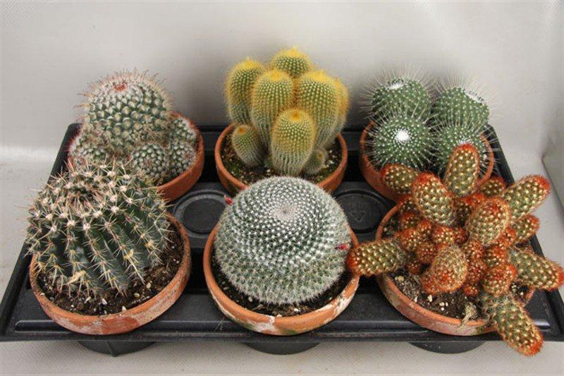 Які кімнатні рослини захистять від електромагнітного випромінювання комп'ютера