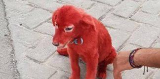 Мужчина купил необычного красного щенка: он был в шоке, когда узнал о собаке правду - today.ua
