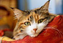 Дуже смішні фото котів: десять доказів, що домашні тварини – майже люди - today.ua