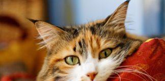 """Дуже смішні фото котів: десять доказів, що домашні тварини – майже люди"""" - today.ua"""