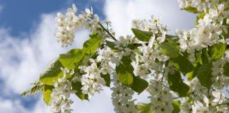 Свято 4 травня: народні прикмети і традиції Проклова дня - today.ua