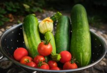 Лунный посевной календарь на июнь: когда лучше высаживать рассаду, чтобы получить хороший урожай - today.ua