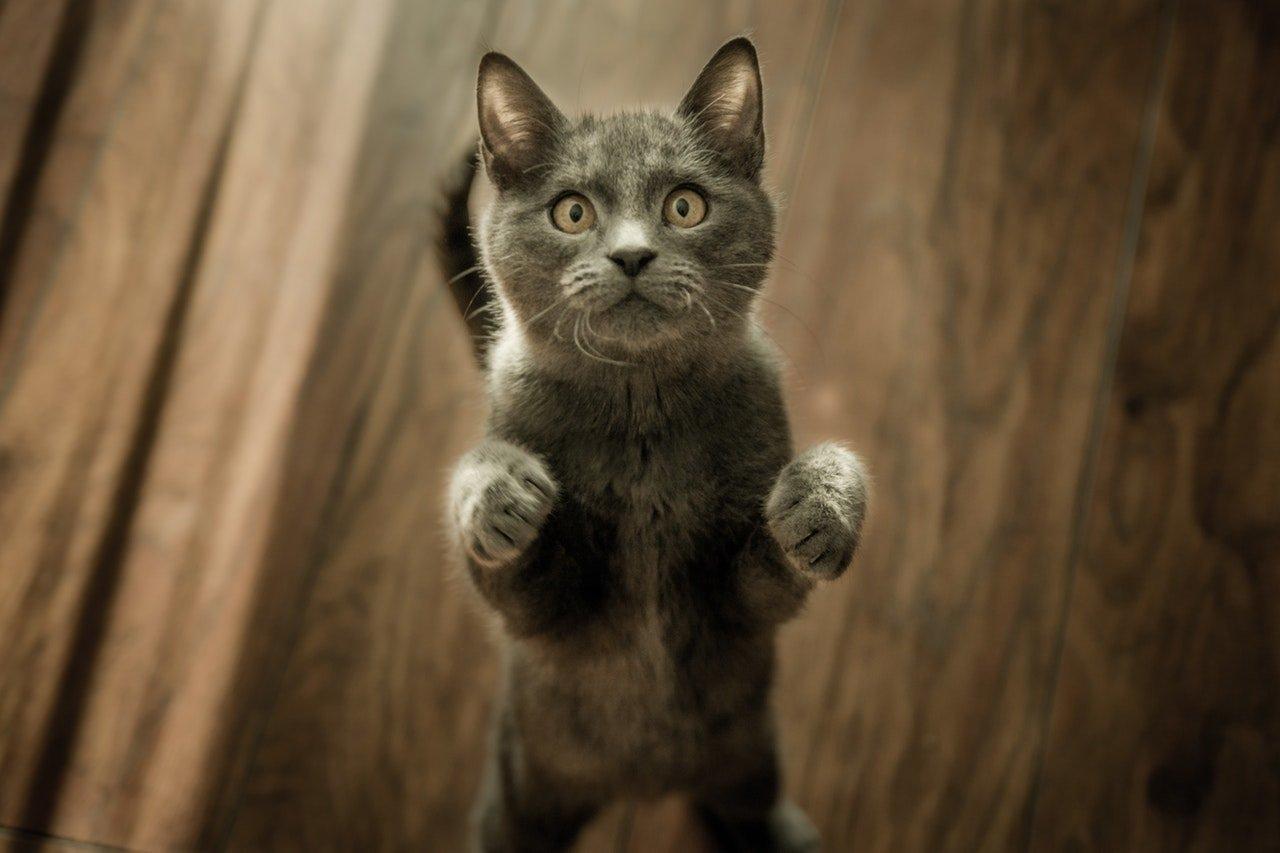 Дуже смішні фото котів: десять доказів, що домашні тварини – майже люди