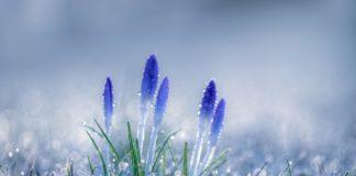 Перепади температур, дощі і заморозки: якою буде погода в Україні у найближчі дні - today.ua