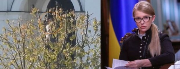 """Прогуляла засідання заради відпочинку: Тимошенко """"спіймали"""" в дорогому спа-готелі"""
