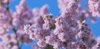 Свято 12 травня: до кого потрібно звертатися за зціленням в День дев'яти мучеників - today.ua