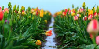 В Україні пройдуть дощі і вдарять морози: синоптики розповіли, коли завершиться весняне похолодання - today.ua