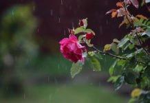 Дощі з грозами і сніг: синоптики приголомшили прогнозом на перший день літа - today.ua