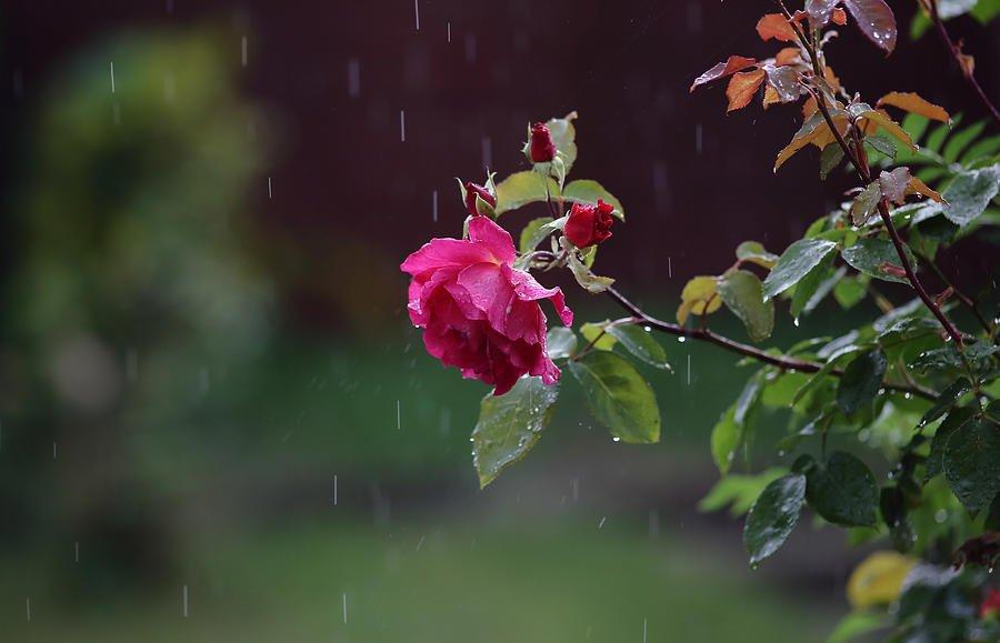 Дожди с грозами и снег: синоптики ошарашили прогнозом на первый день лета - today.ua