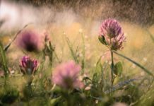 Грозові дощі і потепління до +25: синоптики дали прогноз на найближчі дні - today.ua