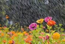 "Синоптики приголомшили прогнозом погоди на червень: ""Буде, як у травні..."" - today.ua"