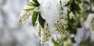 Мокрий сніг і штормовий вітер: синоптики збентежили аномальним прогнозом на середину травня - today.ua