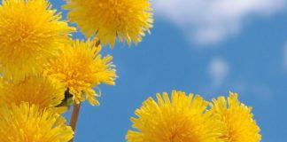 Свято 13 травня: як передбачити погоду і що заборонено робити у День Якова - today.ua