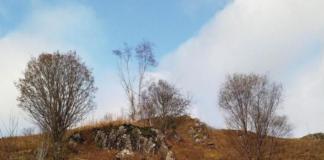 """Тест на уважність: на фото сховався олень, але знайти його можуть лише одиниці"""" - today.ua"""