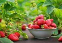 Перші ягоди: на що варто звернути увагу при купівлі ранньої полуниці - today.ua