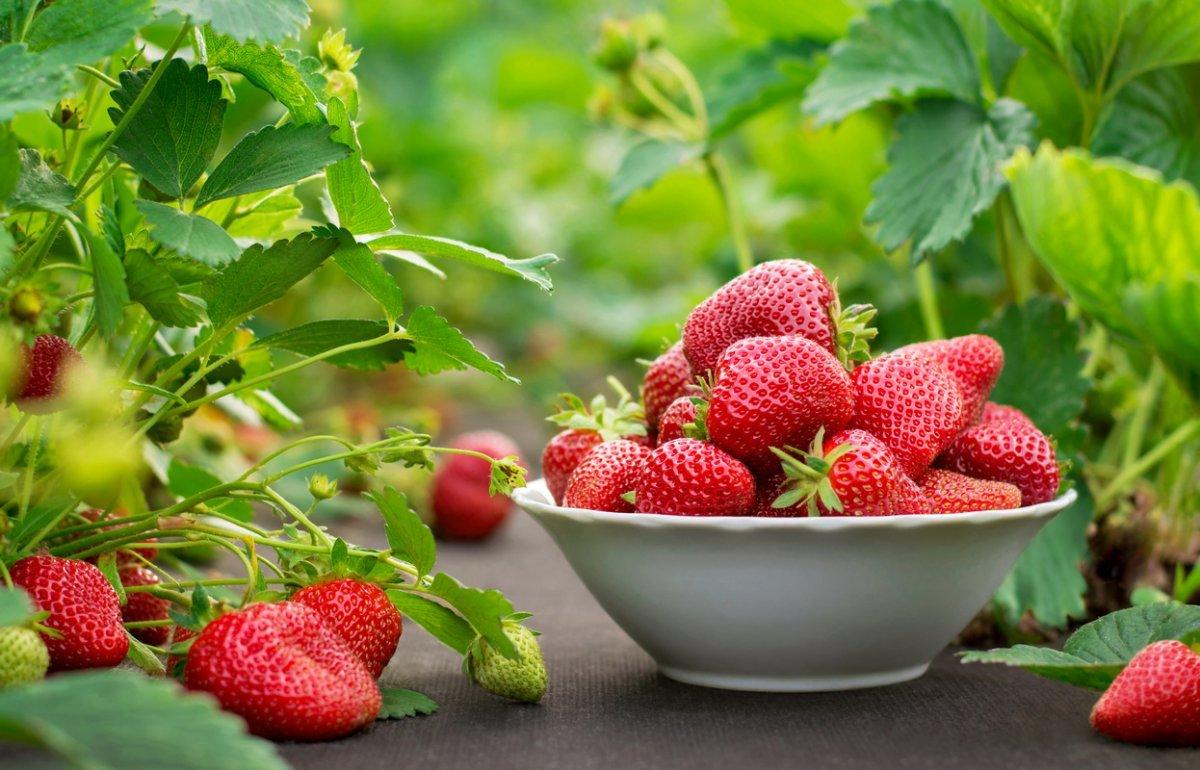 Первые ягоды: на что стоит обратить внимание при покупке ранней клубники - today.ua